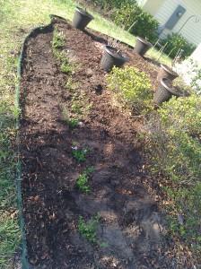 Beginning Of New Front Yard 2012