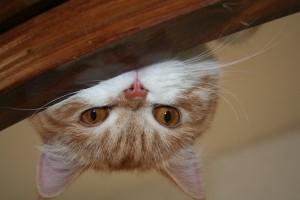 Peeking Theo