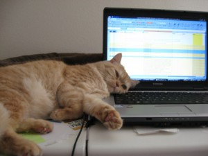 Sofie supervising my writing progress