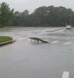 GatorsOut.Debby2012.byLisaCruse