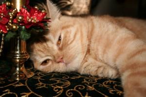 Christmas Sofie