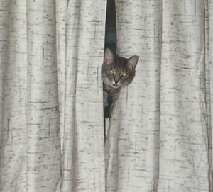 Peek-a-Boo MikeyKat