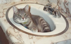 MikeyKat in the sink