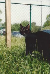 GoofyKat 1996